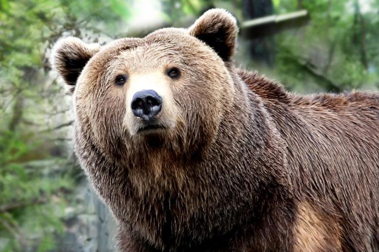 حمله خرس به روستایی در زواردشت الموت