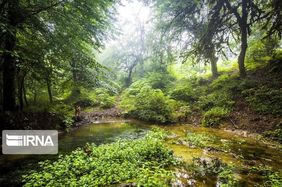 خبرنگاران حفاظت از جنگل های شمال بر اساس حوضه آبخیز تقسیم می شود