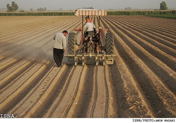 سالیانه 35هزار تن علوفه یونجه در شهرستان خاش تولید می شود