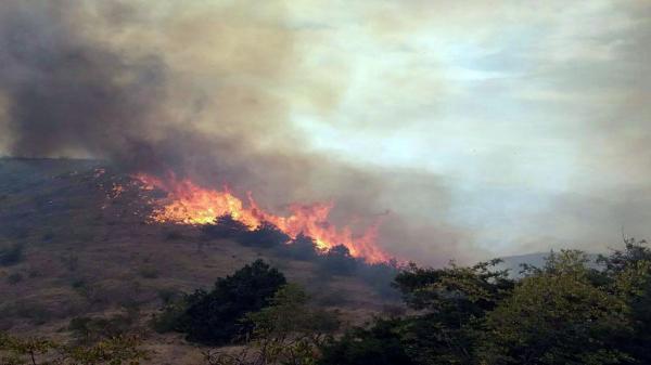 آتش سوزی در جنگل های کوه سیاه کهگیلویه