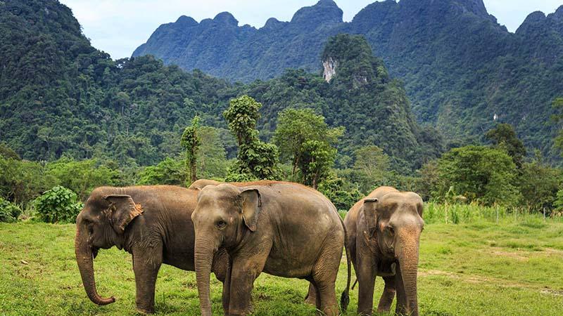 خانه فیل های پوکت