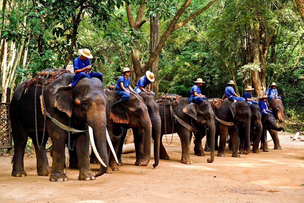 جاذبه های گردشگری چیانگ مای